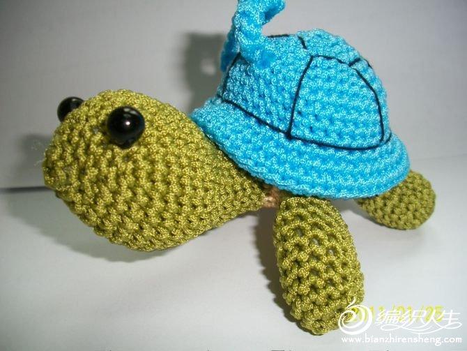 蓝背龟.jpg