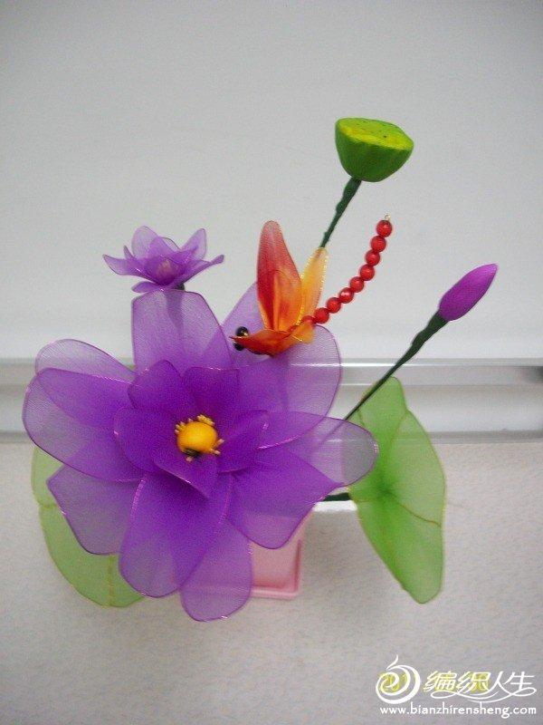 蜻蜓点花.jpg