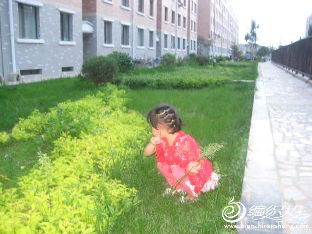 我家小区草坪绿吧