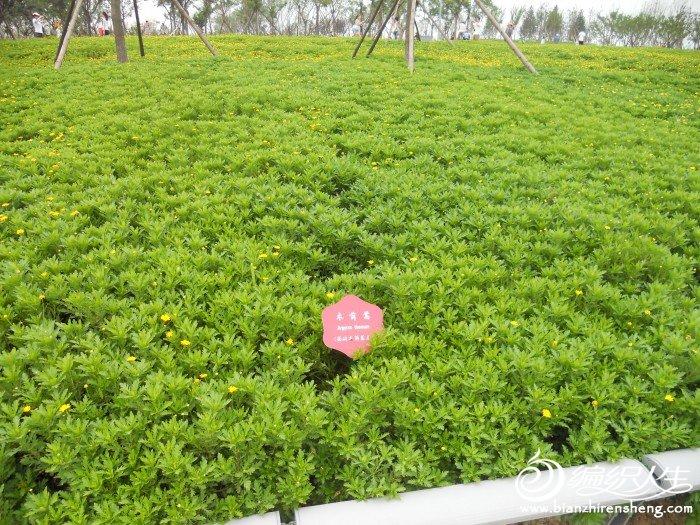 shiyuan 020.jpg