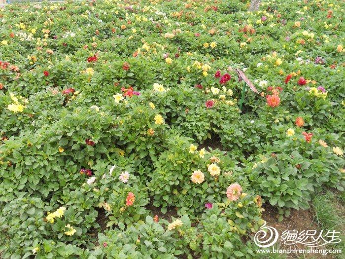 shiyuan 017.jpg