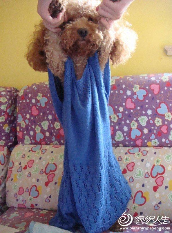 狗模特2.jpg