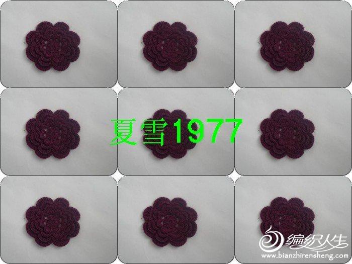 紫色貂绒 025.jpg