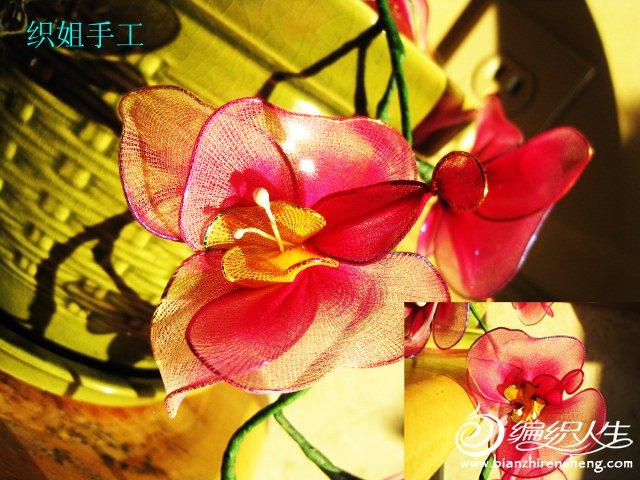 织姐--手工蝴蝶兰 . (7).jpg