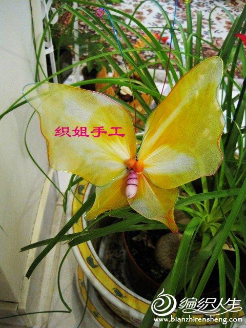 织姐--手工蝴蝶兰 . (10).jpg