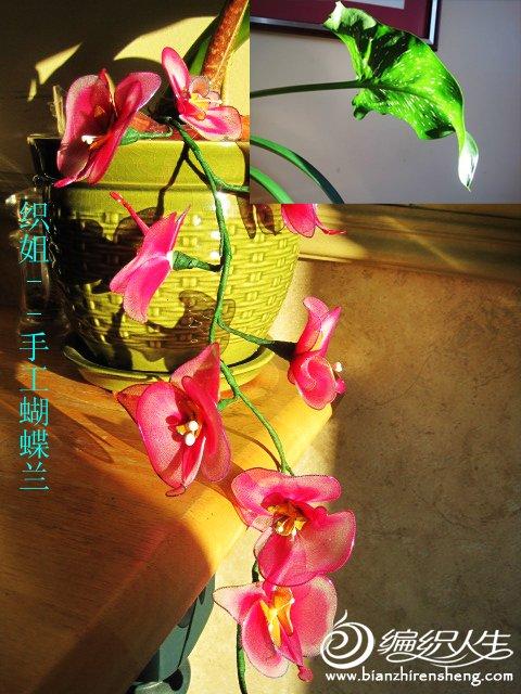 织姐手工--丝网蝴蝶兰