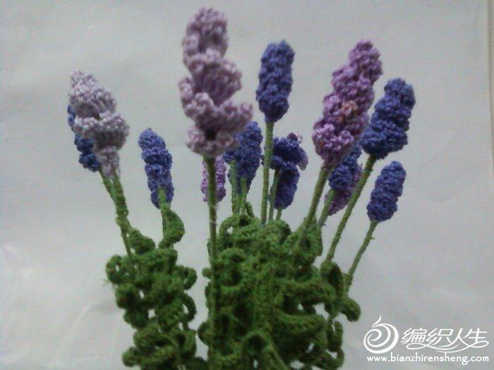 因为薰衣草所以喜欢紫色,一针一线一份情,一花一草一世界