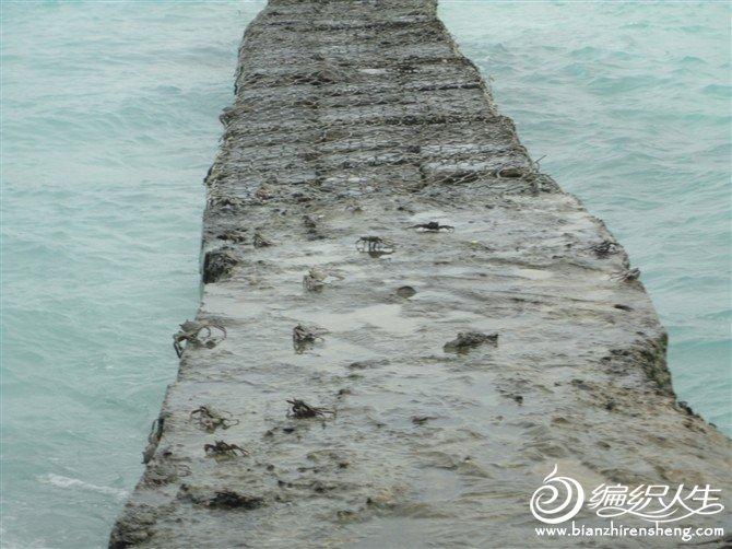 防浪堤上全是螃蟹