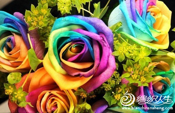 彩玫瑰.jpg