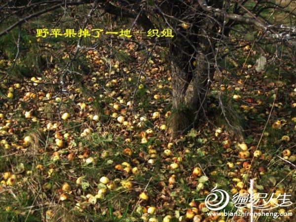 织姐--踏秋摄影 (33).jpg