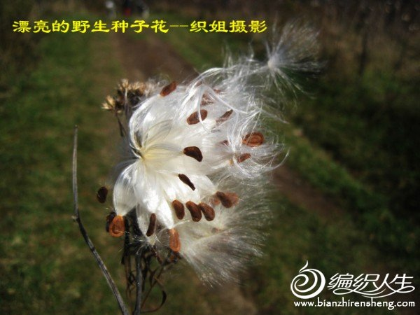 织姐--踏秋摄影 (42).jpg