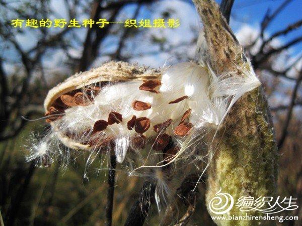 织姐--踏秋摄影 (43).jpg