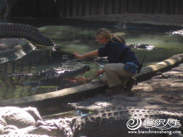 织姐拍摄--佛罗里达某鳄鱼馆里 (7).jpg