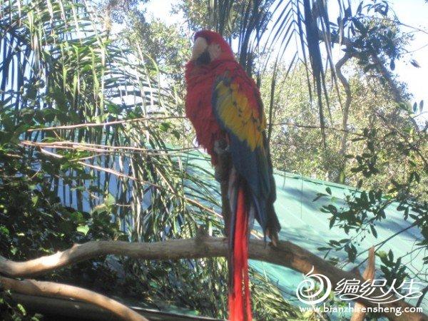 织姐拍摄--佛罗里达某鳄鱼馆里 (16).jpg