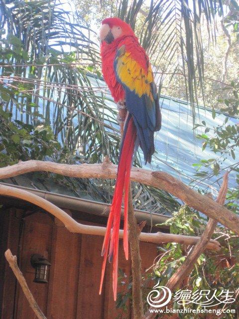 织姐拍摄--佛罗里达某鳄鱼馆里 (19).jpg