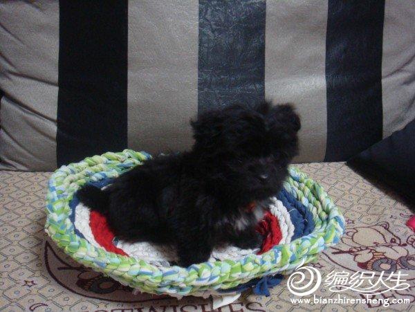 狗狗的坐垫