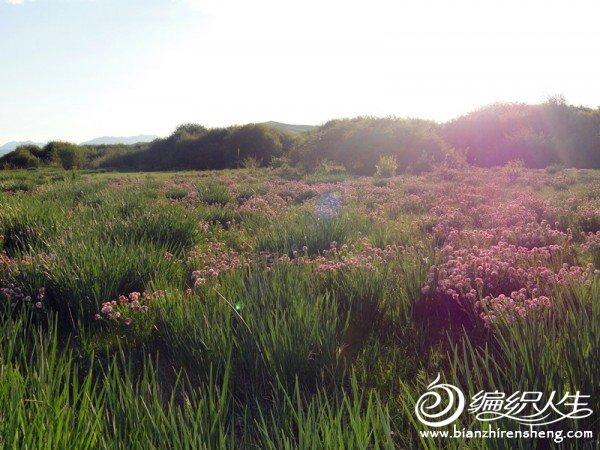 皇城6月风景 096_副本.jpg