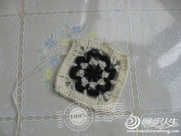 白色单元花