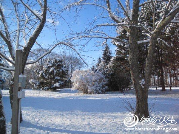 2011多伦多第一场大雪 (5).jpg