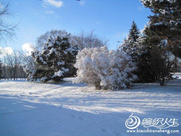 2011多伦多第一场大雪 (6).jpg
