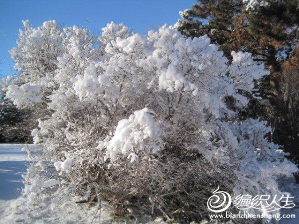 2011多伦多第一场大雪 (9).jpg