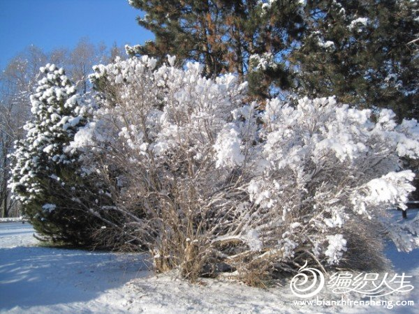 2011多伦多第一场大雪 (11).jpg