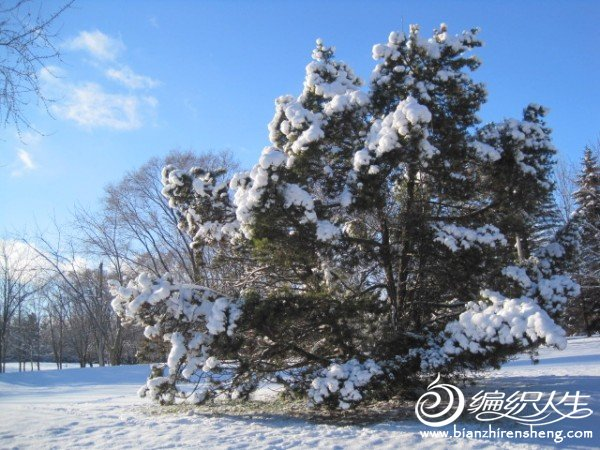 2011多伦多第一场大雪 (14).jpg