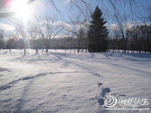 2011多伦多第一场大雪 (16).jpg