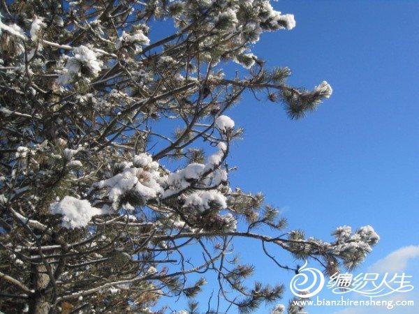 2011多伦多第一场大雪 (19).jpg