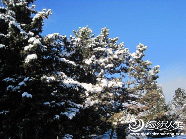 2011多伦多第一场大雪 (23).jpg