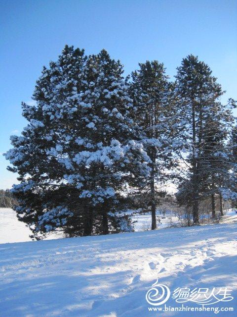 2011多伦多第一场大雪 (25).jpg