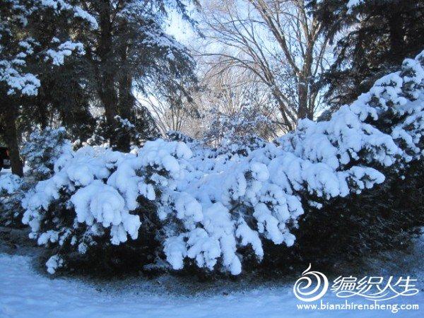 2011多伦多第一场大雪 (28).jpg