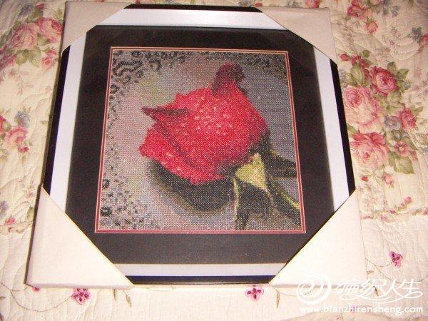 红玫瑰.JPG