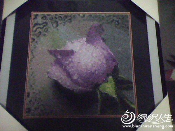 紫玫瑰1.jpg