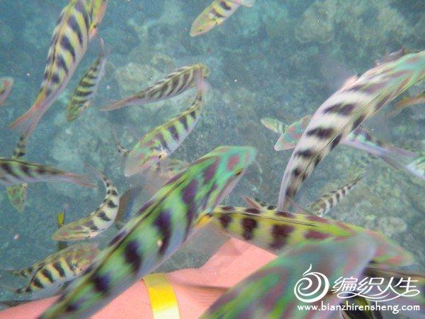 A14水下拍摄的鱼群(浮潜活动).jpg