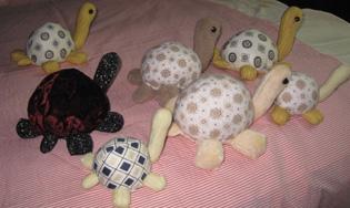 乌龟群 .jpg