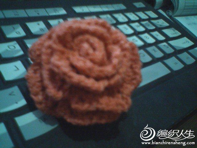 新学会的玫瑰花