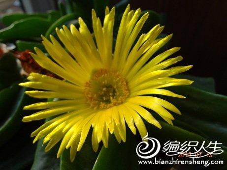 晒晒我家的花