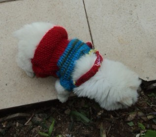 狗狗的衣服.jpg