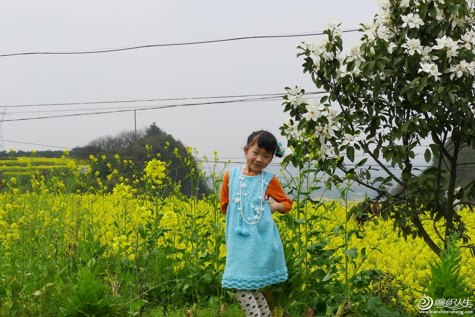 油菜花中的小公主