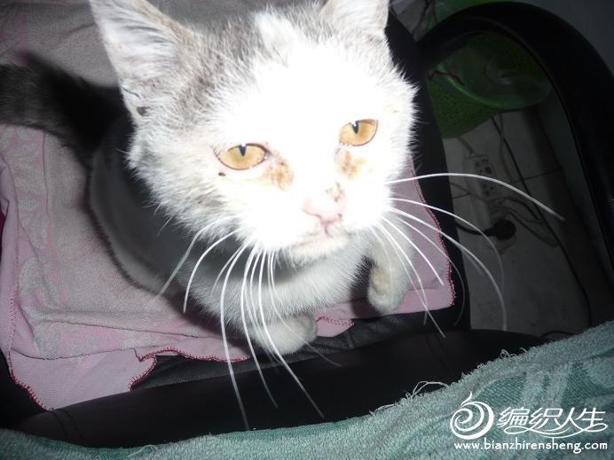 在单位养的小流浪猫咪.JPG