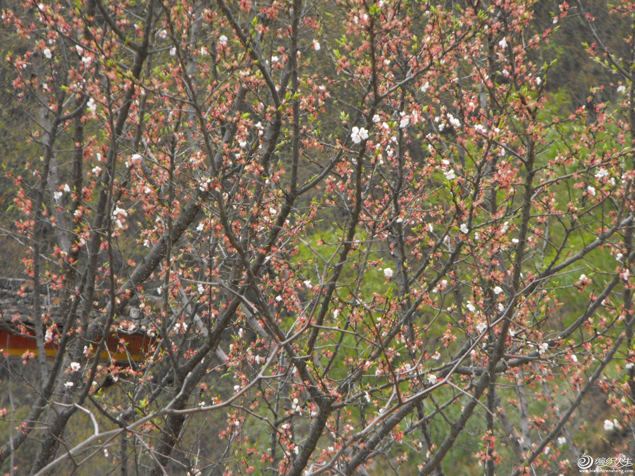 照片春天 035.jpg
