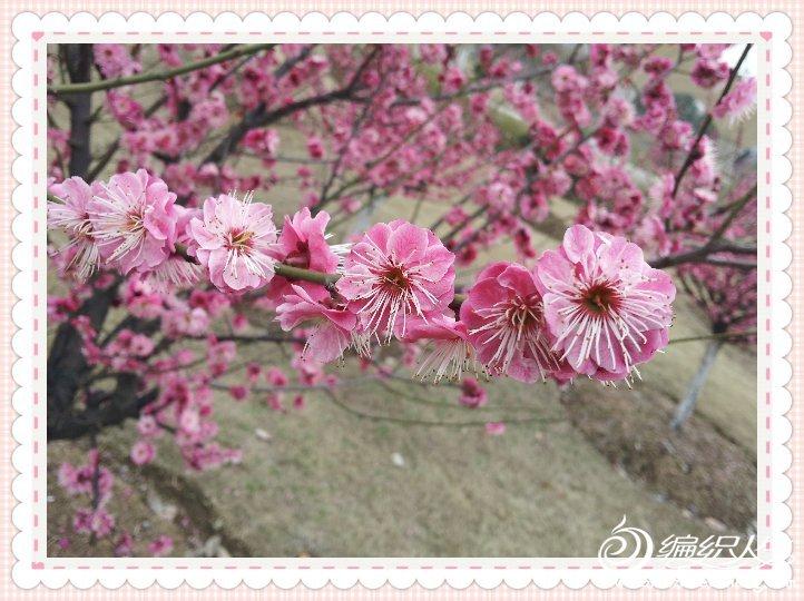 2012-03-22 11.57.15_美化000.jpg