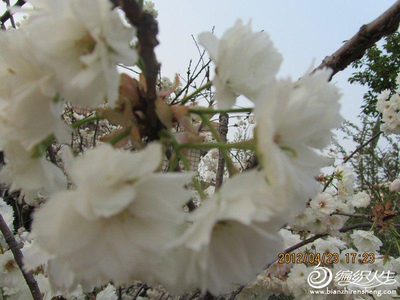 IMG_0938_副本.jpg