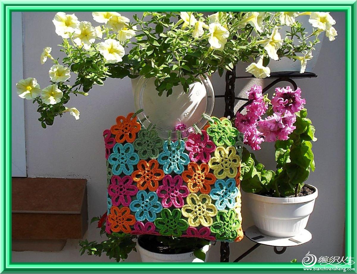 包六角花.jpg