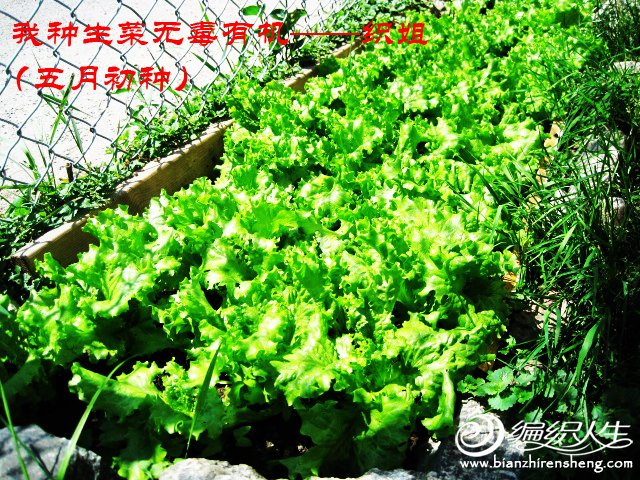 我家花园五月花卉-织姐拍摄- (2).jpg