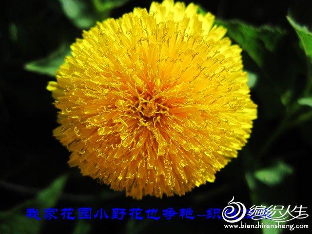 我家花园五月花卉-织姐拍摄- (5).jpg