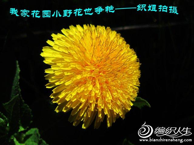 我家花园五月花卉-织姐拍摄- (6).jpg