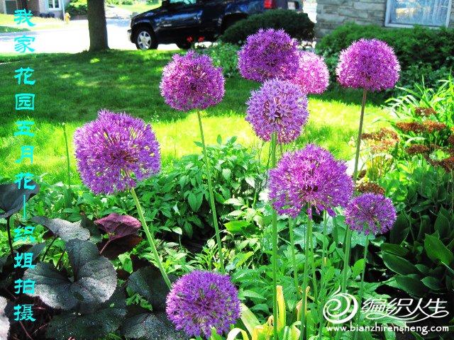 我家花园五月花卉-织姐拍摄- (9).jpg