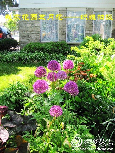 我家花园五月花卉-织姐拍摄- (12).jpg